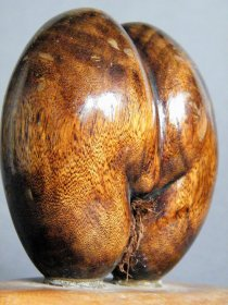 "#1746  Small Carved Wood Imitation ""Coco dr Mer"" (Sea Coconut) from the Seychelles  **SOLD**  December 2018"