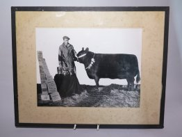 "#1752  ""Prize Bull""  Photograph, circa 1930s **Sold** September 2018"