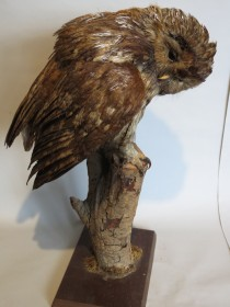 #1562  Stuffed Tawney Owl