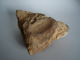 #0243 Fossilized Icthyosaurus Vertebrum, Jurassic Period  **Sold**  in our Liverpool shop